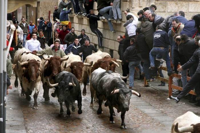 El carnaval de Ciudad Rodrigo comprende encierros y desencierros de toros