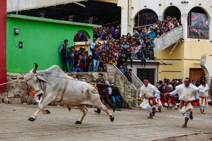 La ceremonia de los toros en el carnaval de San Juan Chamula se lleva a cabo el último día